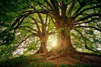 Les beaux arbres de notre terre